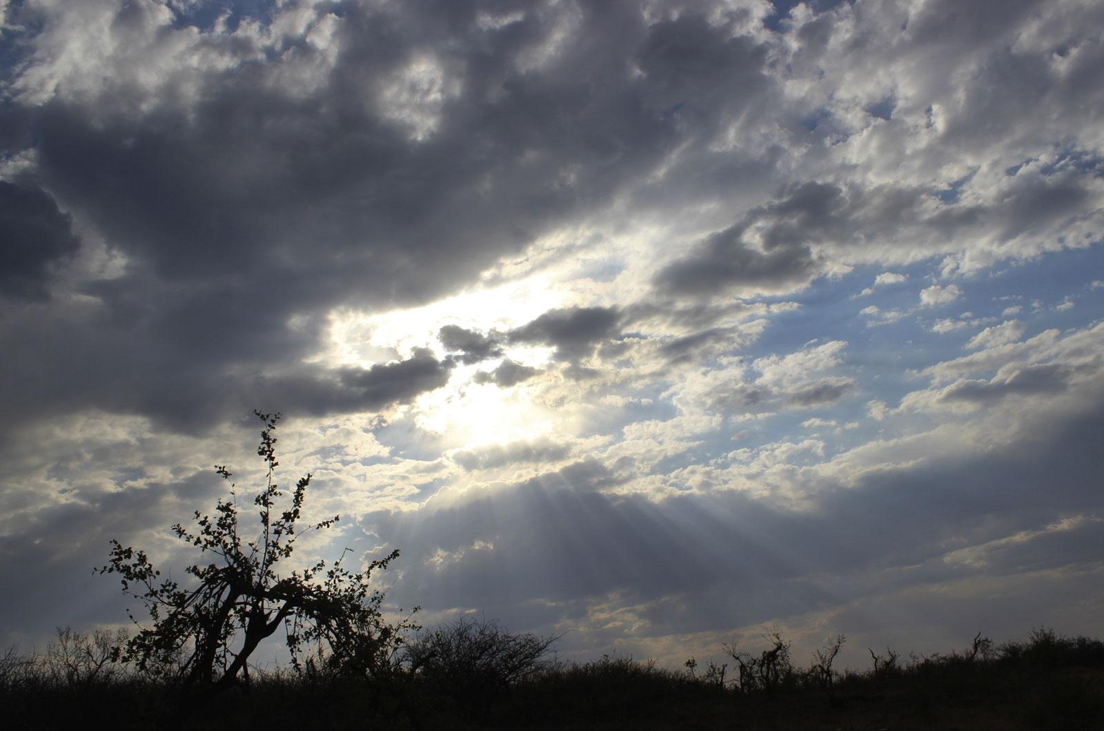 Bush Sky