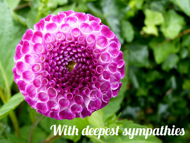 expressions-flower-deepest-sympathies