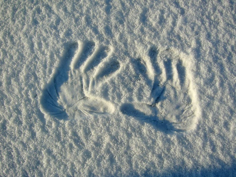 Snow hand prints