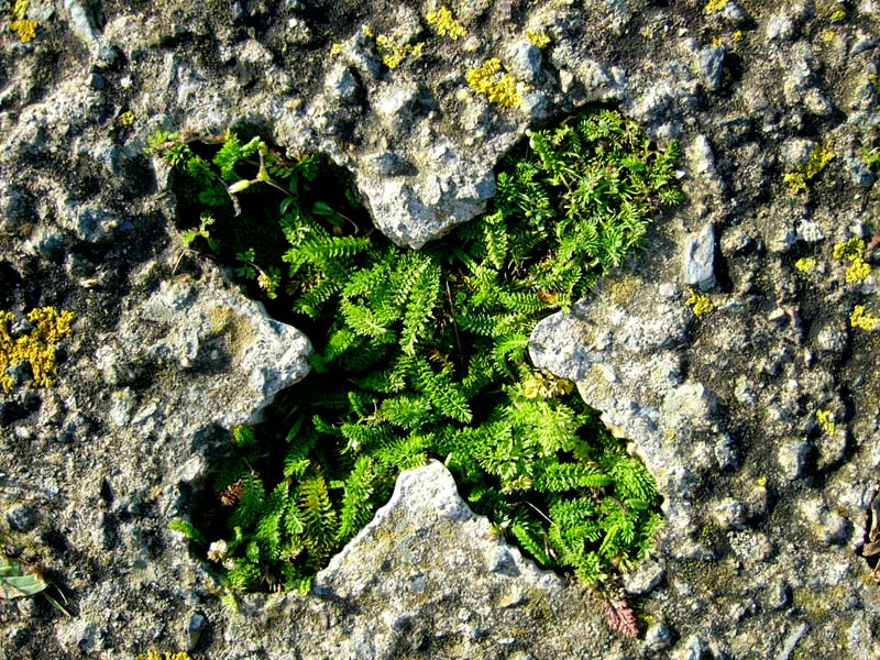 Plants in a cross