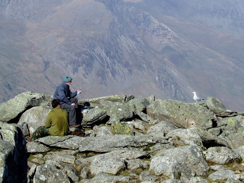 Two men and a seagull on Tryfan