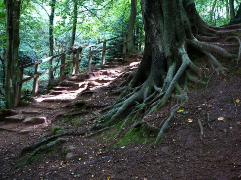 Dimmingsdale tree