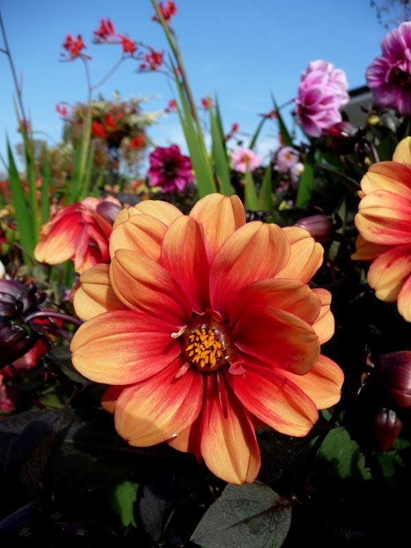 Chester Zoo Flower