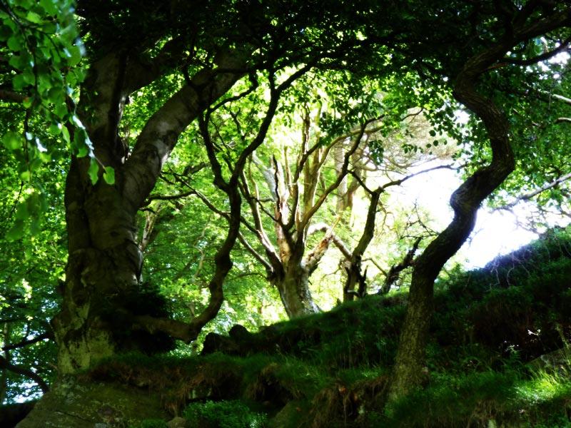 Three Shires Head trees