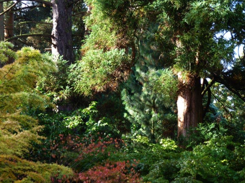Pocket of trees