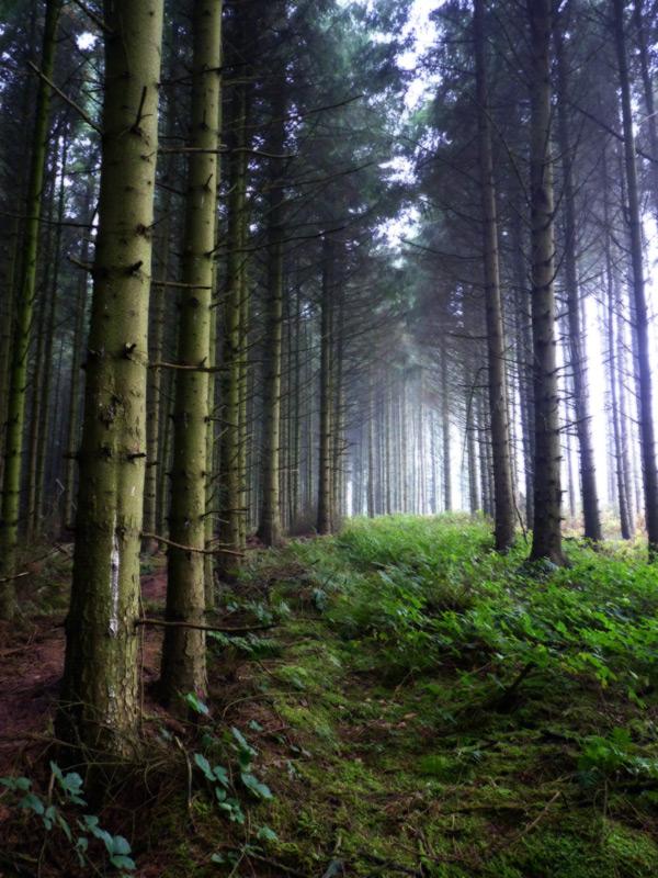 Trees, Moel Famau