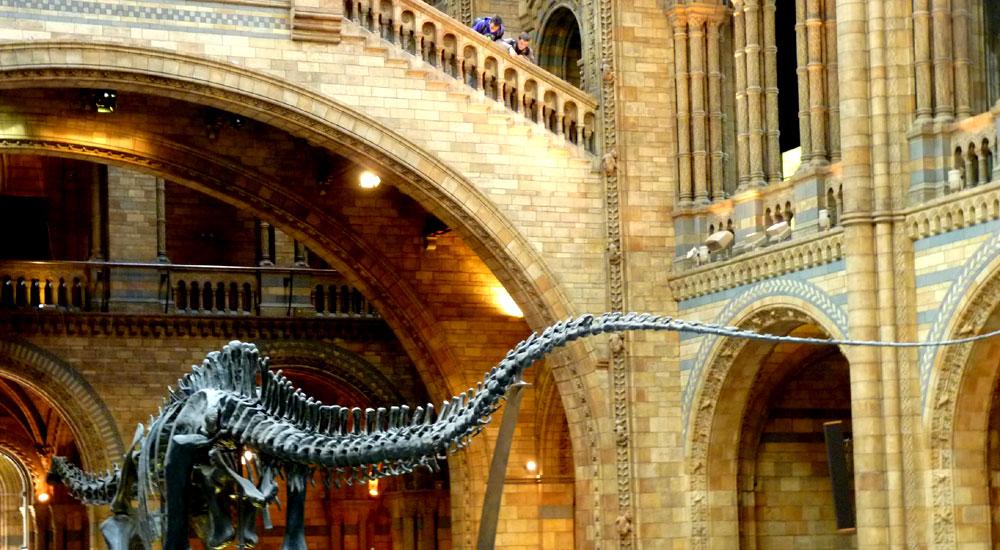 Dinosaur, Central Hall, Natural History Museum