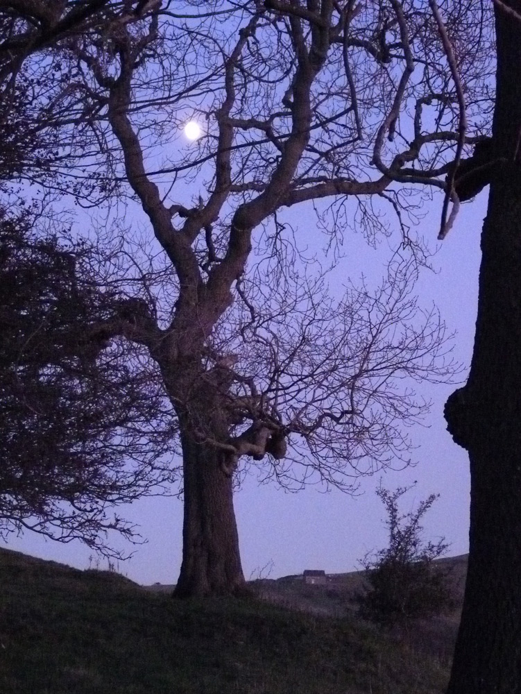 Ash tree and the moon