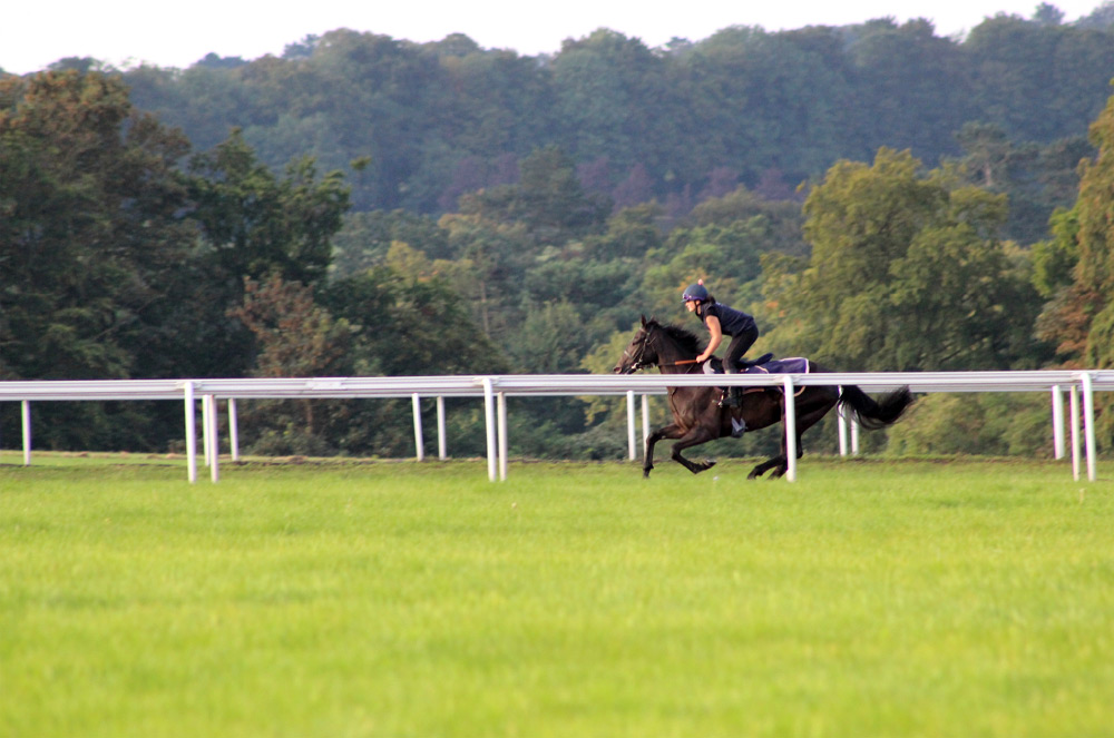 Galloping on the gallops