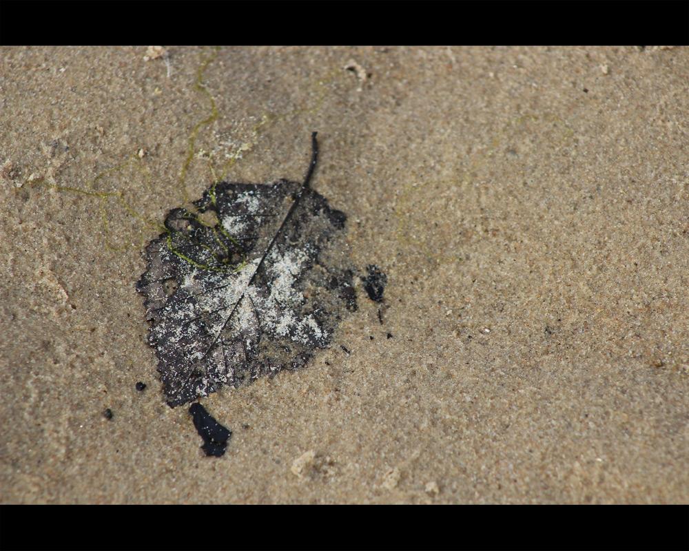 Sandy leaf