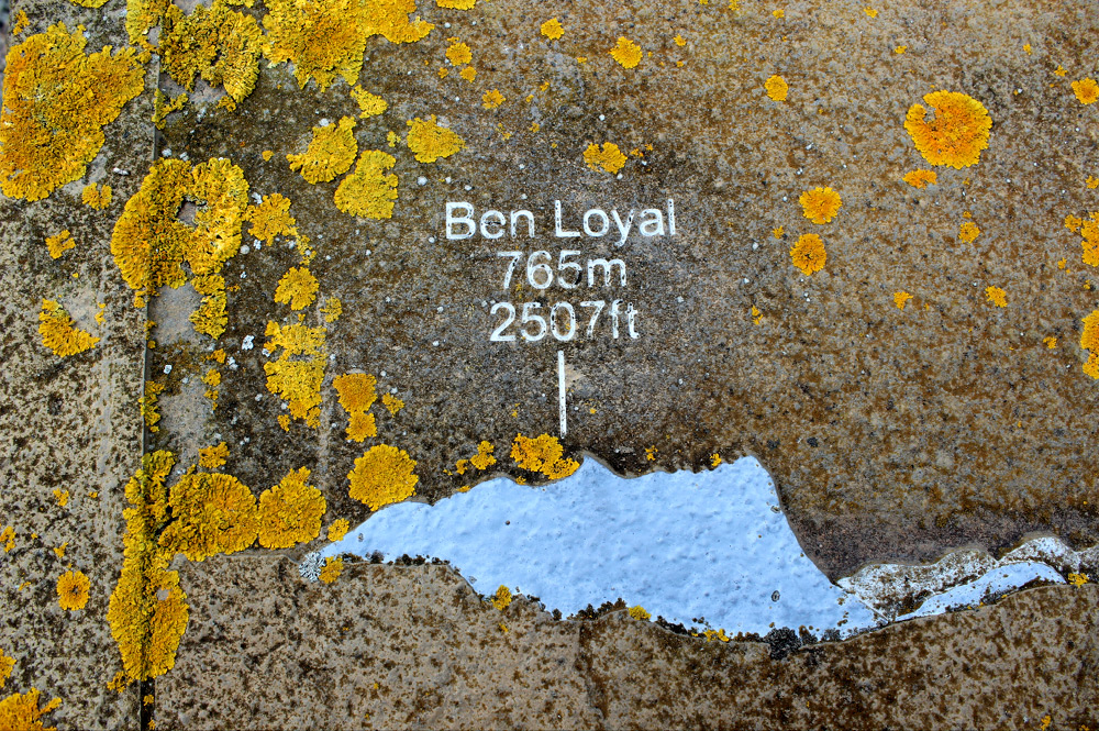 Ben Loyal