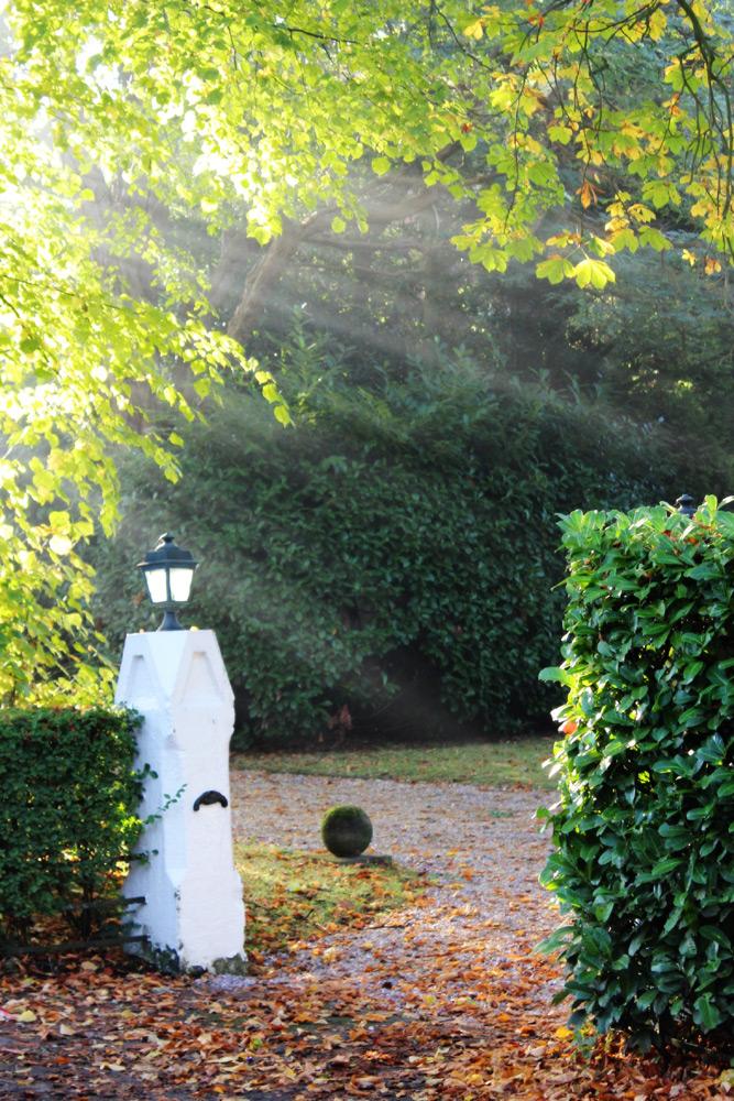 Sunrays, trees