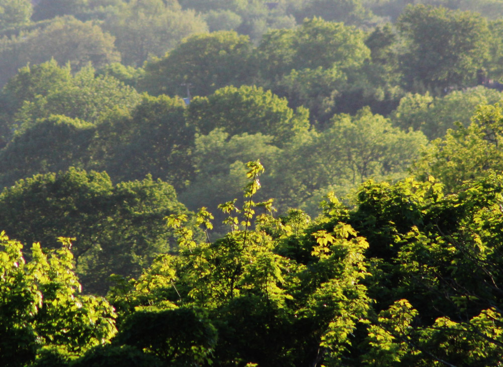 Cheshire trees