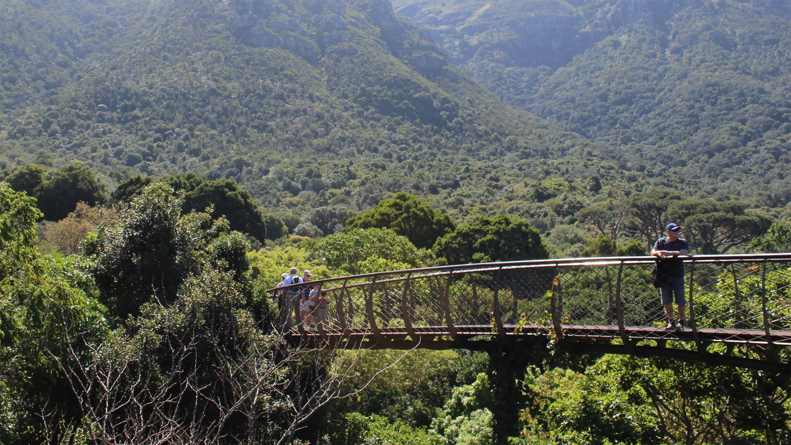 Kirstenbosch Centenary Tree Canopy Walkway