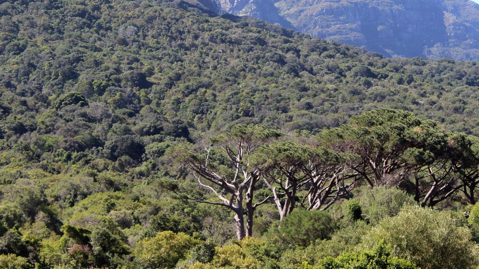 Trees, trees, trees