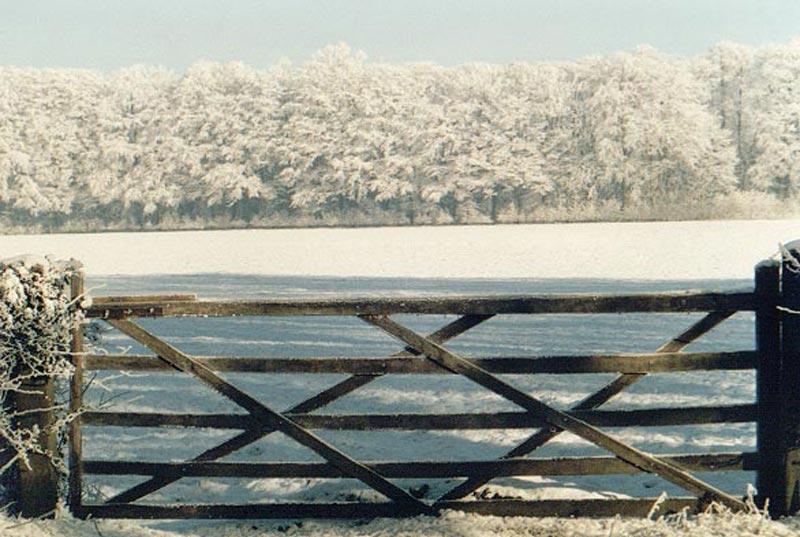 Snow / trees