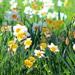 Select: Spring scene [Sent: 31]
